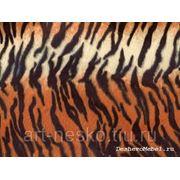Зоо мульти тигр фото