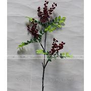 Ветка лесных ягод фото