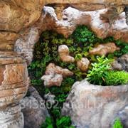 Вертикальное озеленение стен, домов, заборов фото