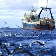 Рыболовство в океане фото