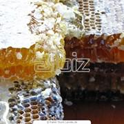 Мед пчелиный фотография