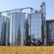 Зерносушилка ANTI фото