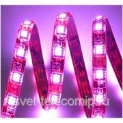 Светодиодная лента LED 562 фото