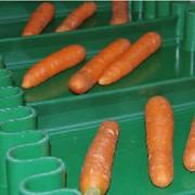 Полиуретановые ленты для пищевой промышленности (PU) фото