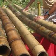 Стволы бамбуковые фото