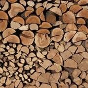 Поленье древесное фото