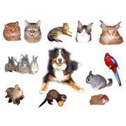 Животные домашние фото