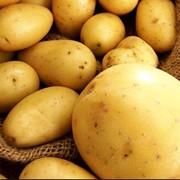 Potatoes фото