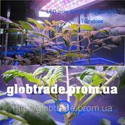 300W фитосветильник (фитопанель) -лампа для растений, СВЕТОДИОДНЫЕ Панели Красный/Синий/Оранжевый