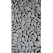Фасоль белая Кыргызстан Киргизия на экспорт (White Beans from kyrgyzystan) фото