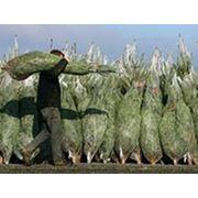 Сетка (рукав) для упаковки новогодних елок. фото