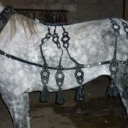 Упряжь для лошади фото