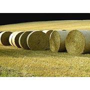 Солома, ячневая, пшеничная, просяная фото