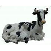 Корова с теленком фото