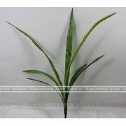 Букет листьев цимбидиума фото