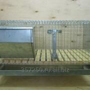 Клетка для откорма кроликов 960х520х360мм (деревянный пол) фото