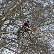 Обрезка, кронирование, удаление деревьев фото