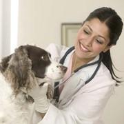 Ветеринарная диагностика фото