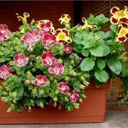 Цветочные горшки и цветники фото