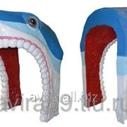 Декоративный вход в лабиринт голова акулы фото