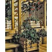 Антисептики для древесины Wolmanit СХ-8 фото