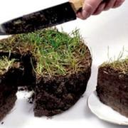 Земельное право. Землеустроительные услуги. фото