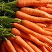 Морковь сладкая отборная фото