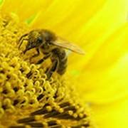 Товары пчеловодства фото