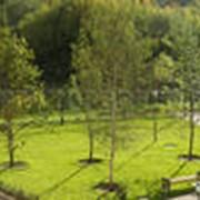 Озеленение городское фото