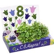 Колокольчики Живая открытка Happy Plant наборы для выращивания фото