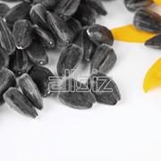 Семечковые и косточковые фрукты фото