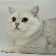 Кормовые добавки для кошек фото