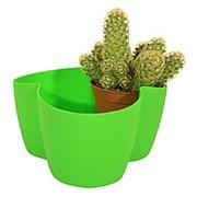 Кактусница на 3 растения (зеленая) фото
