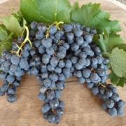 Концентрат виноградного сока фото