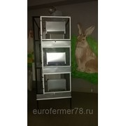 Клетка для кроликов 1-3 с маточником и увеличенными поддонами ЕвроФермер78 фото