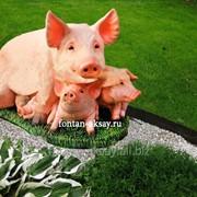 Свинья с поросятами фото