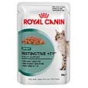 Корм для котов Royal Canin Ageing +12 In Gravy фото