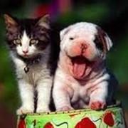 Дегельминтизация кошек и собак фото