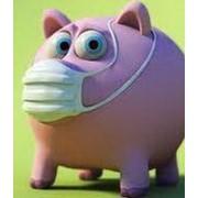 Парвовирусной болезни, лептоспироза, болезни Ауески и репродуктивно-респираторного синдрома свиней (ПЛАР) фото