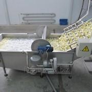Моечная машина для овощей и фруктов - вентиляторные, щеточные фото