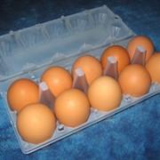 Пластиковая упаковка для яиц на 10 штук фото