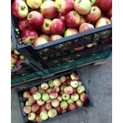 Полировка, воскование яблок фото