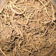 Корень валерианы, Valeriána officinális фото