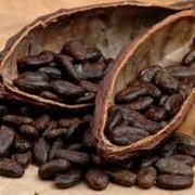 Какао экстракт фото