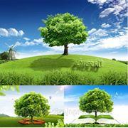 Обучение веб дизайну 329-77-82 фото