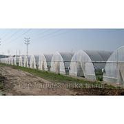 Фермерския теплица TEDEN-500 полностью укомплектованая фото