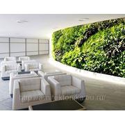 Вертикальное озеленение в интерьере (стена из растений) фото