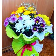"""Букет из 7 кустовых разноцветных хризантем """"С Днем Рождения!"""" фото"""