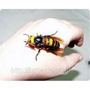 Борьба с пчелами фото