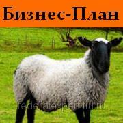 Бизнес-план по разведению овец фото